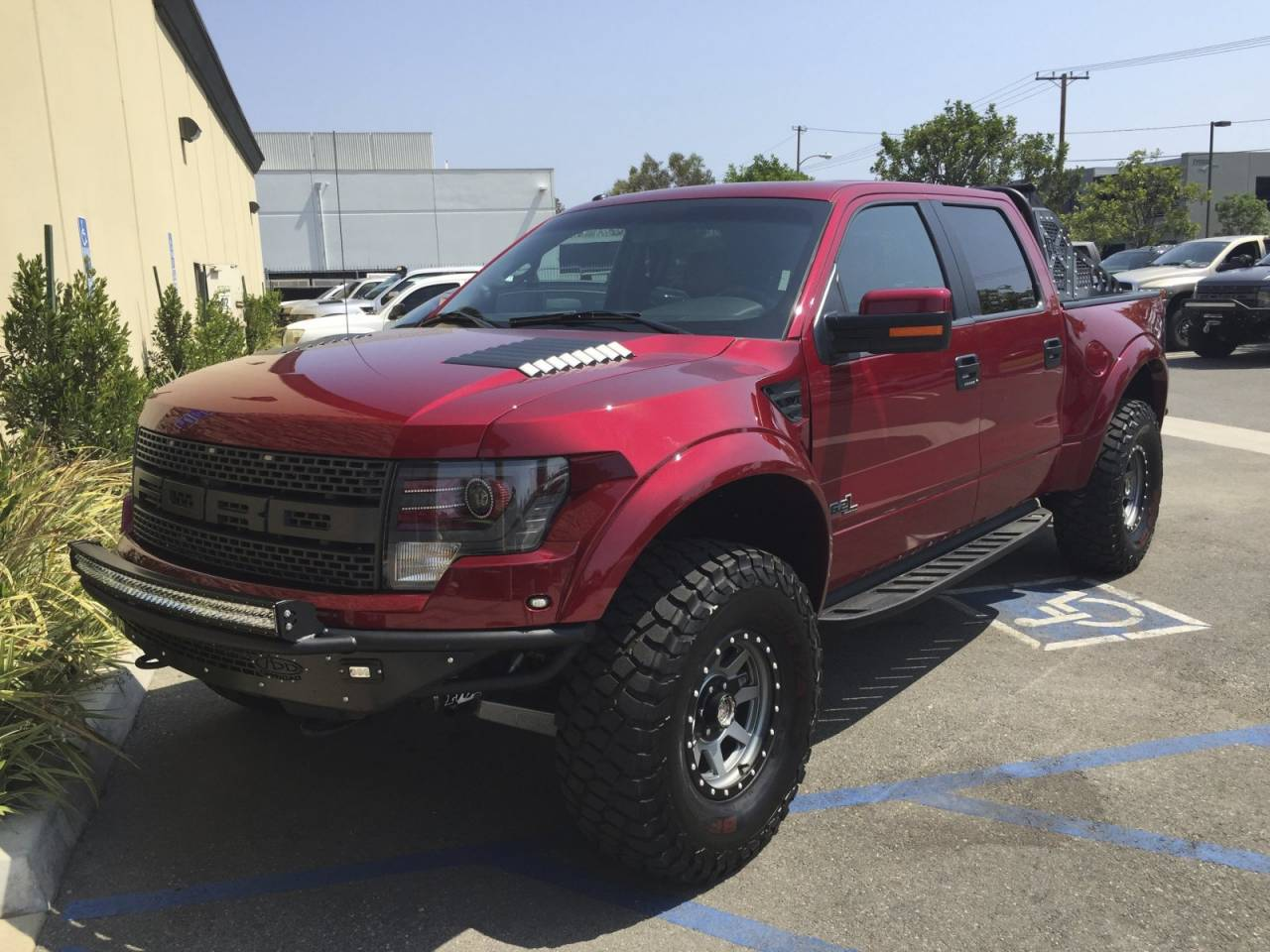 Photo Gallery Ruby Red Raptor